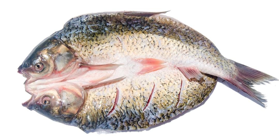 冰鲜开背鱼可为烤鱼店引爆客流,原来是真的!
