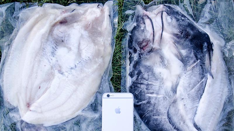 鮰鱼(750g-850g)
