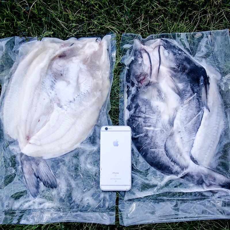 鮰鱼750-850 5