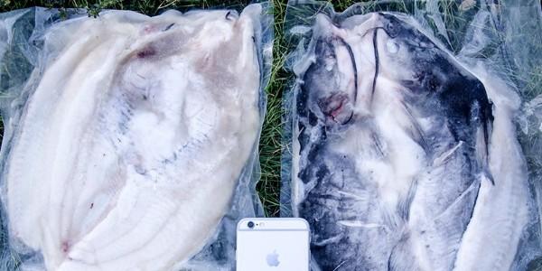 小规格开背鮰鱼-三珍食品官网