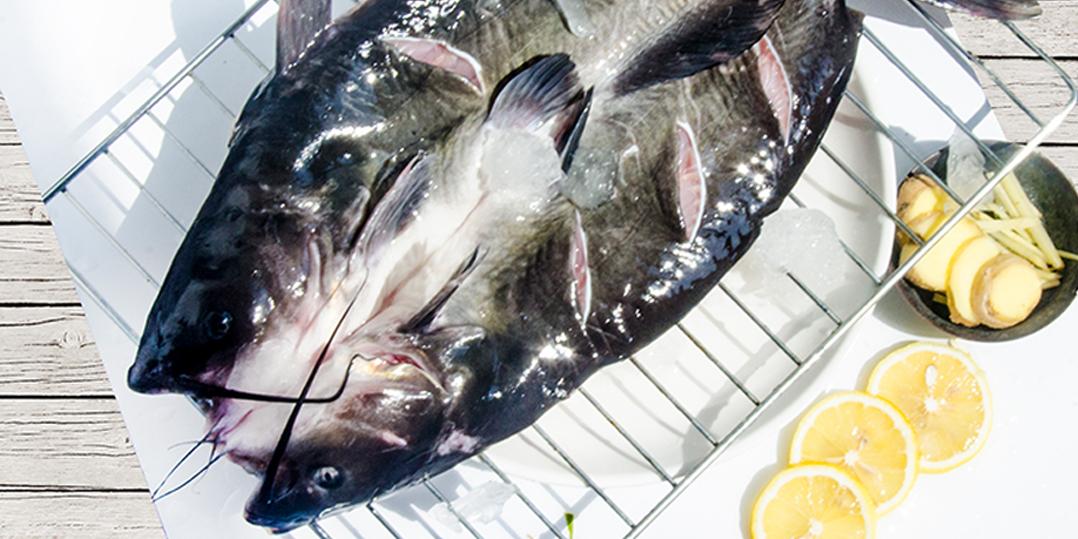为什么说开烤鱼店,选用冰鲜开背鱼很重要?