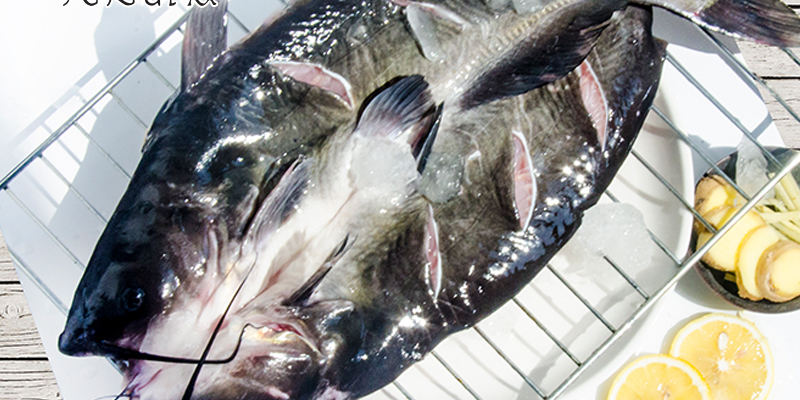 为什么吃货们聚餐必选烤鱼餐厅